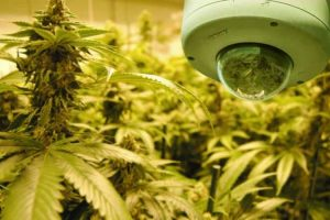What is a Dispensary Security Plan?